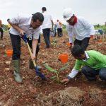 Gandeng Petani,  PT. Semen Indonesia Tanam Ribuan Pohon Pisang